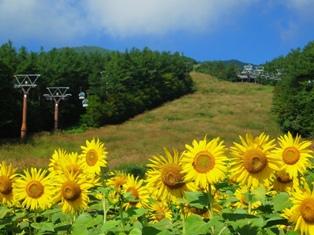 10.8.29-himawari.jpg
